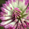 Lensbaby : 